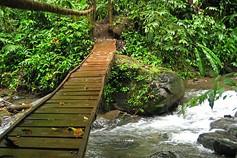 bridge-forest.jpg