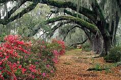 flowered-path.jpg